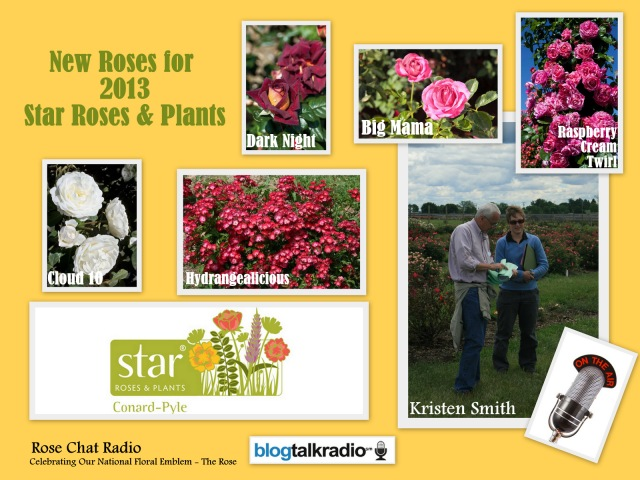 Star Roses & Plants | Rose Chat Radio